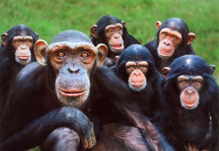 glenys20101124_primate7