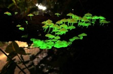 glow in the dark mushrooms 2